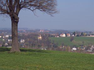 Blick vom Zuckertütenbaum