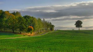 Landschaft mit Zuckertütenbaum